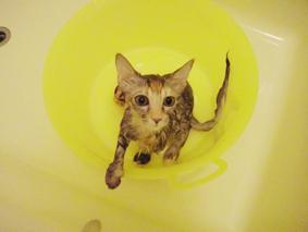 fio風呂