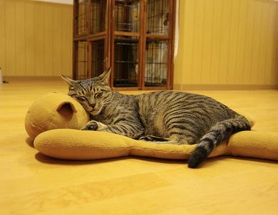 猫カフェ6