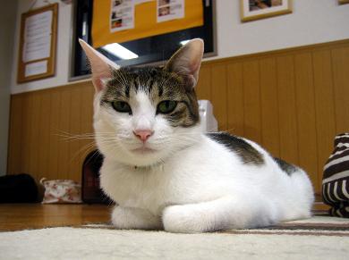 猫カフェ8