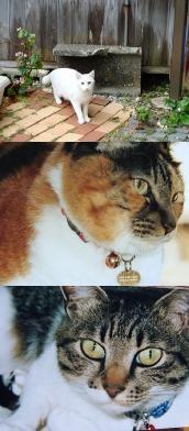 緊急募集の猫
