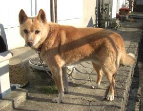 迷子犬ウィ―ズ2