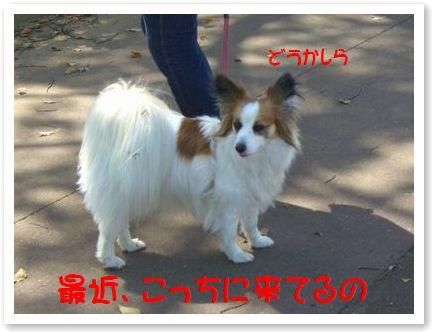 CIMG7059ss.jpg