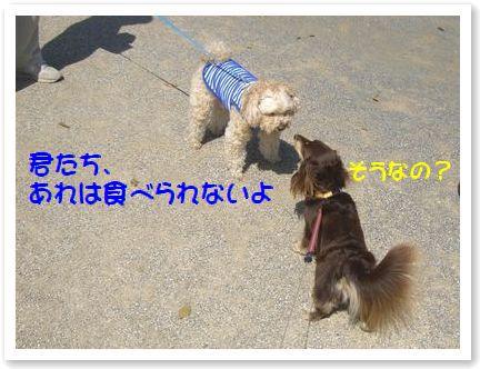 CIMG7063ss.jpg