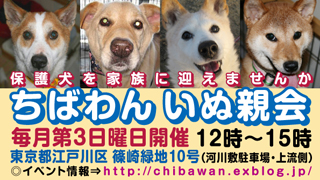 chibawan_teiki_inuoyakai320x180.jpg