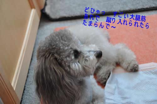 DSC_0339_convert_20091103213747 1