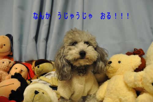 DSC_0121_convert_20091225041952 1