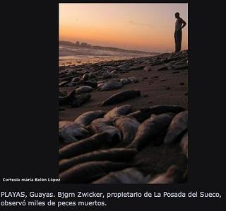 DeadfishEcuador.jpg