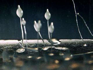 amoeba-farmers-bacteria_31340_big.jpg