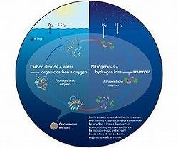 marine-bacterium-crocosphaera-watsonii-biochemical-recycle-iron-ocean-lg.jpg