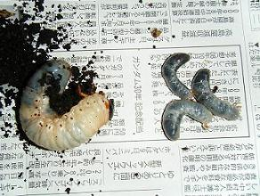 2008_1013takotako0023.jpg