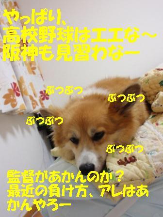 P8170591.jpg
