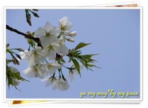 桜11-04-02