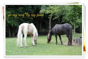 温泉街の馬1
