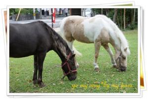 温泉街の馬2