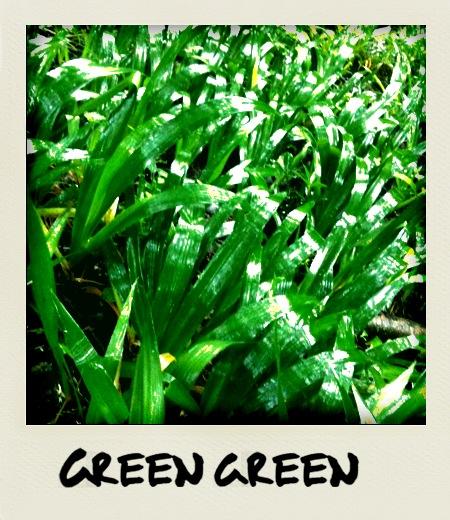 グリーン・グリーン