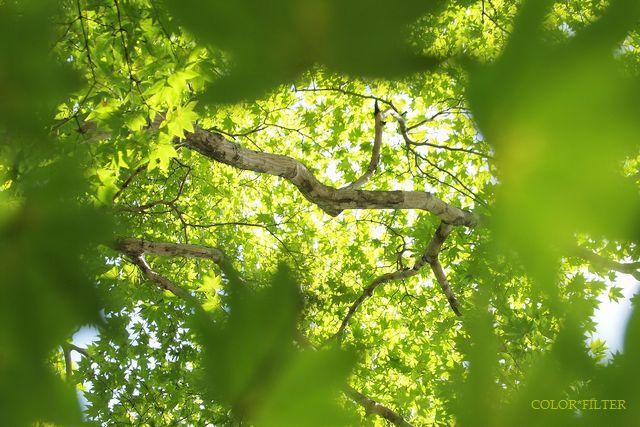真夏の木漏れ日