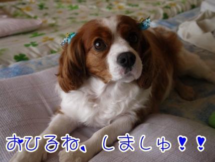 かわいいよ~!!