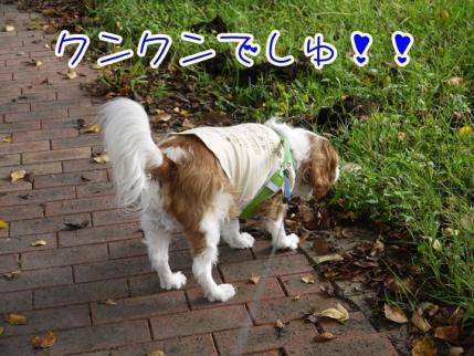 秋のお散歩!!