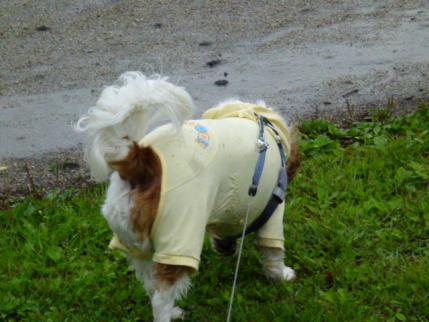 大雨、ですが・・・。