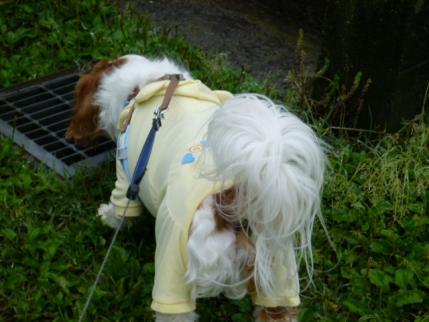 雨のお散歩!!