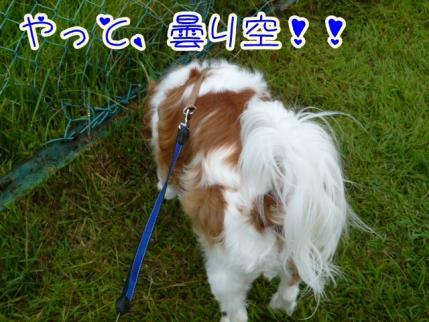 曇り空!!