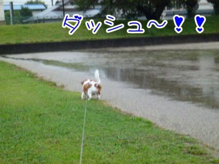 今日も雨です!!
