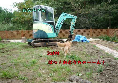 P1020988.jpg