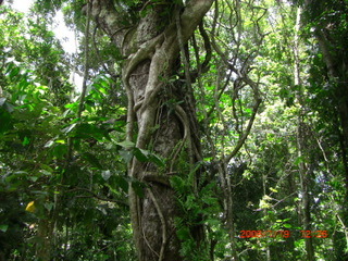 キュランダ熱帯雨林ツアー