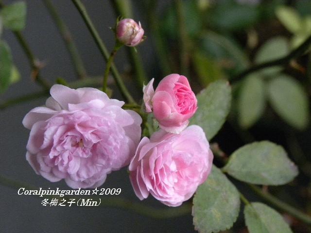 DSCN0328.jpg
