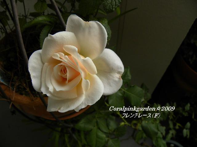 DSCN0429.jpg