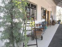 Co.restyleのガーデン植木のアブラナ