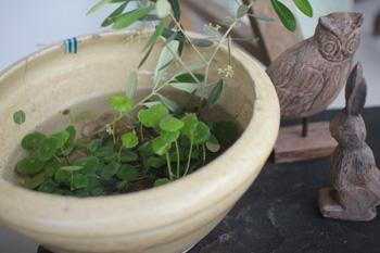 古道具。水盆で涼しげに。ガーデン提案