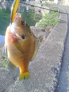 釣り日記 奥琵琶湖