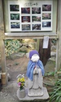 鎌倉100126_明月院