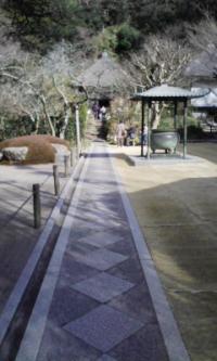 鎌倉100126_明月院2