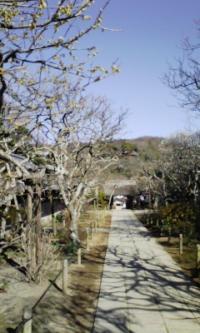 鎌倉100126_東慶寺
