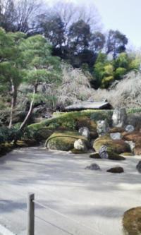 鎌倉100126_明月院4