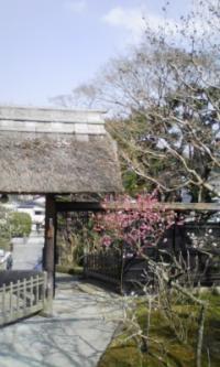 100222_東慶寺4