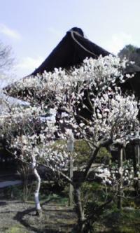 100222_東慶寺1