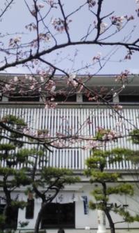 鎌倉_100323_3