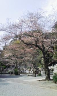 鎌倉_100323_19