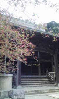 鎌倉_100323_17