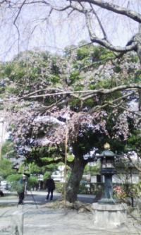 鎌倉_100323_24