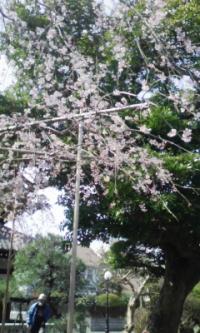 鎌倉_100323_22