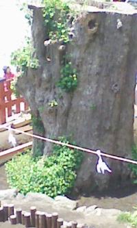 鎌倉100601_1