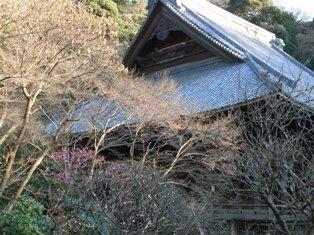 鎌倉_110119_1