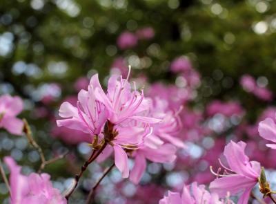 蓼科の春1