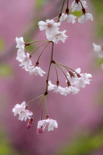 蓼科の春3