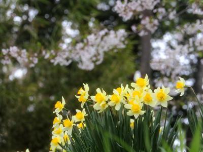 蓼科の春2