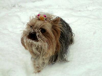 ラビちょに雪がついたでちょ